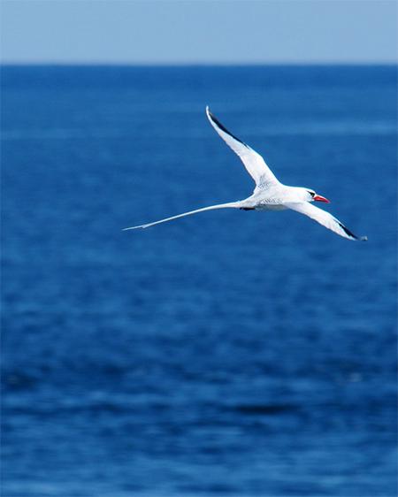 biologieles wereldschool voorbeeld vogelsoort